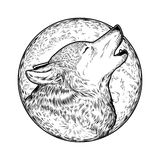 Illustration de vecteur d'un loup d'hurlement Photos libres de droits