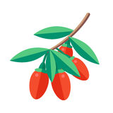 Illustration de vecteur de baies de Goji Icône wolfberry de Superfood guérissez illustration de vecteur