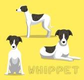 Illustration de vecteur de bande dessinée de whippet de chien illustration stock
