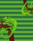 Illustration de vecteur de carte de caméléon Photo libre de droits