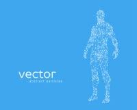 Illustration de vecteur de corps humain illustration stock