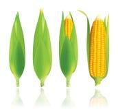 Illustration de vecteur de maïs Images libres de droits