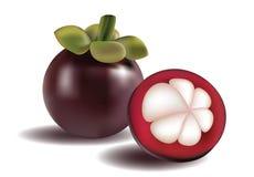 Illustration de mangoustan Photo stock