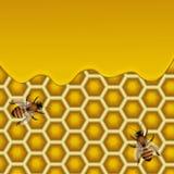 Illustration de vecteur de nids d'abeilles Image stock