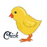 Illustration de vecteur de poussin d'oiseau Photos libres de droits