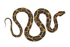 Illustration de vecteur de python Photographie stock libre de droits
