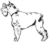 Race de chien de Schnauzer Photo stock