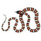 Illustration de vecteur de serpent de corail Images libres de droits