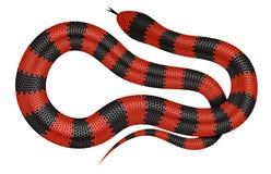 Illustration de vecteur de serpent de corail Photo libre de droits