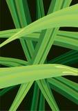 Illustration de vecteur des courbes vertes illustration de vecteur