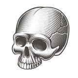 Illustration de vecteur du crâne sans mâchoire inférieure illustration de vecteur