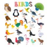 Illustration de vecteur du genre différent d'oiseaux Bande dessinée mignonne BIR Photographie stock libre de droits