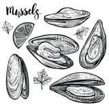 Illustration de vecteur de moules Croquis de fruits de mer Engvaving d'isolement des palourdes photos libres de droits