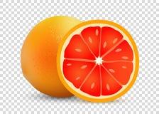 Illustration de vecteur de pamplemousse de fond transparent - fruit réaliste doux savoureux mûr illustration stock