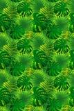 Illustration de vecteur de plantes tropicales Affiche tropicale de feuillage Fond de jungle Texture sans joint Cadre de Verticala illustration stock