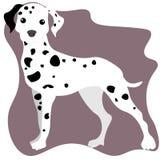 Illustration de Web d'un chien dalmatien mignon toute l'attention illustration de vecteur