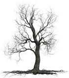 Dead Tree, Roots, Branches, Isolated