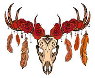 Illustration of a deer skull with roses, feathers Royalty Free Stock Image