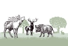 Illustration of deer and wild boar. Deer and wild boar standing in green forest illustration Royalty Free Stock Image