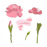 illustration Delicate carnation flower Stock Photography