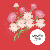 illustration Delicate carnation flower stock illustration