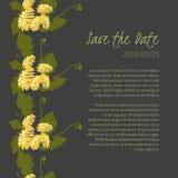 illustration Delicate Dandelion flower Stock Image
