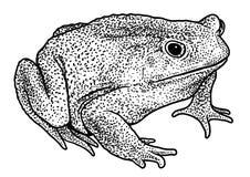Illustration der Europäischen Sumpfschildkröte, Zeichnung, Stich, Tinte, Linie Kunst, vectorFire Salamanderillustration, Zeichnun Stockfoto