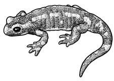 Illustration der Europäischen Sumpfschildkröte, Zeichnung, Stich, Tinte, Linie Kunst, vectorFire Salamanderillustration, Zeichnun Stockfotos