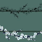 Illustration der japanischen Kirschblüte auf rosa Hintergrund Lizenzfreie Stockfotografie