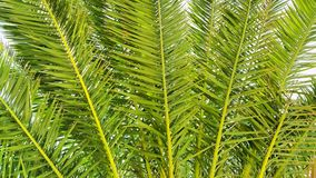 Illustration der Palme verzweigt sich Nahaufnahme Lizenzfreies Stockbild