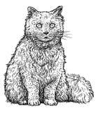 Illustration der persischen Katze, Zeichnung, Stich, Tinte, Linie Kunst, Vektor Lizenzfreies Stockfoto