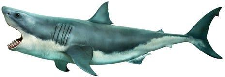 Illustration der Seitenansicht 3D des Weißen Hais Lizenzfreie Stockfotos