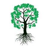 Illustration des Ahornbaums und der Wurzeln Lizenzfreie Stockfotografie