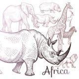 Illustration des animaux africains Images libres de droits
