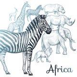 Illustration des animaux africains Photos stock