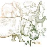Illustration des animaux africains Image libre de droits