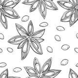 Illustration des Anises Stockbild