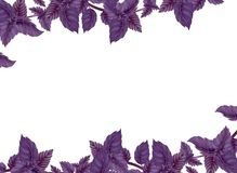 Illustration des Basilikums Dekor von liane Stockfoto