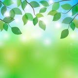 Illustration des branches d'arbre dans le jour ensoleillé Photo stock
