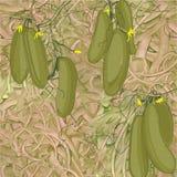 Illustration des concombres sans couture de modèle Image stock