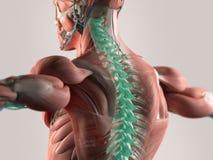 Illustration des douleurs de dos chroniques Images libres de droits