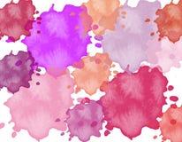 Illustration des farbigen Rosas, Purpur, Gelb, blauer Schmied lizenzfreie abbildung