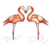 Illustration des flamants de rose d'amour Photos libres de droits