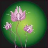 Illustration des fleurs roses de source Photographie stock