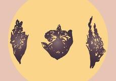 Illustration des fleurs sur un fond du soleil de soirée Orchidée, glaïeul, elandÑŽ Photographie stock libre de droits
