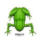 Illustration des Frosches Stockbilder