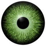 Illustration des grünen Auges Stockfotografie