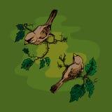 Illustration des oiseaux sur une branche, carte de voeux Photos stock