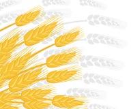 Illustration des oreilles de blé Blé d'agriculture Oreilles argentées de blé de silhouette sur le fond Illustration plate de vect images libres de droits