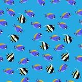 Illustration des poissons mauresques d'idole Photos libres de droits